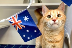 Cat Haven's Australia Day special for a special bunch of cats