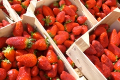'Pick-your-own': Why WA strawberry farms are opening to the public early